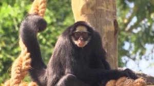 zoo di Rio de Janeiro