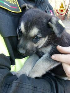 cane. due cuccioli intrappolati in tubature: salvati dai Vigili del Fuoco