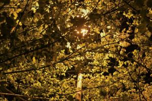 Roma. Strade al buio, la luce dei lampioni coperta dai rami degli alberi