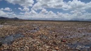 lago Uru-uru completamente ricoperto di plastica