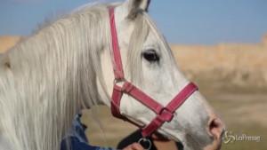 festival dei cavalli nel sito Unesco di Hatra