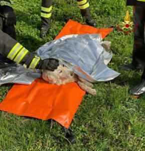 Vigili del Fuoco salvano cane in difficoltà in un torrente