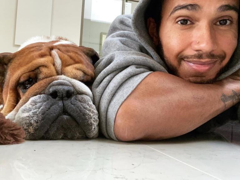 Lewis Hamilton e Roscoe, un bulldog inglese