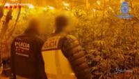 bande del narcotraffico