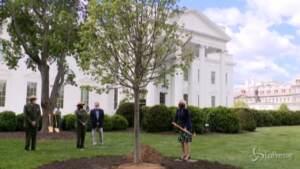 Jill Biden pianta un albero alla Casa Bianca