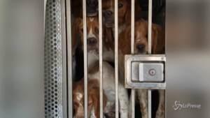 trasportava cani in pessime condizioni
