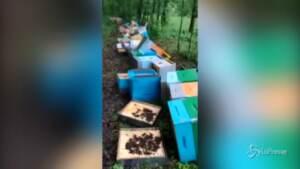 Strage di api nel Canavese, la rabbia del giovane apicoltore