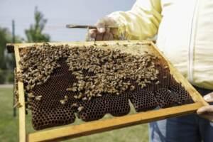 Giornata Mondiale della Terra, cresce l'apicoltura a Milano