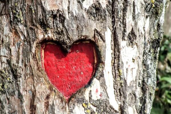Oroscopo del giorno di martedì 1 giugno, Leone: Il cuore batte forte