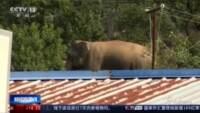 Elefanti in Cina