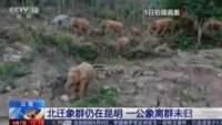 Il branco di elefanti ripreso da una tv cinese