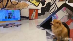 Hong Kong, mostra per cani: opere d'arte esposte all'altezza degli occhi degli animali