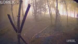Usa: telecamera cattura l'esplosione di un incendio nella foresta del Minnesota