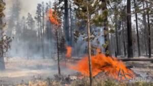 California, incendi: il vento favorisce il lavoro dei vigili del fuoco