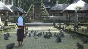 Bali, mancano turisti al santuario 'Monkey forest': le scimmie rubano cibo nei villaggi