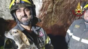 Cucciola di beagle incastrata sotto un masso, salvata dai Vigili del Fuoco